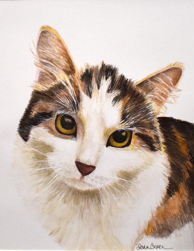 Cat-Portrait-Stormie5